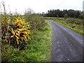 H3574 : Drumbarley Road, Leganvy by Kenneth  Allen