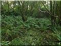 NS2974 : Woodhead Quarries (disused) by Lairich Rig