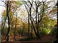 SD7011 : Footpath in Raveden Wood by Philip Platt