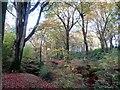 SD7011 : Woodland in Autumn by Philip Platt