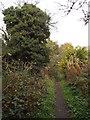 NZ3355 : Weardale Way near Washington by Malc McDonald