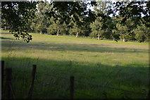 TQ3226 : Pasture by N Chadwick