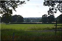 TQ3227 : Sussex farmland by N Chadwick
