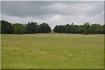 TQ5244 : Sheep grazing, Penshurst Park by N Chadwick