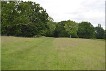 TQ5445 : Footpath to Leigh by N Chadwick