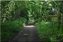 TQ5445 : Darkened footpath by N Chadwick
