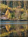 SD3291 : Reflection, Hob Gill Tarn : Week 45