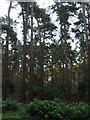 SJ5450 : Moss Wood by JThomas