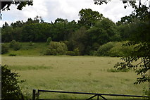 TQ5243 : Meadow by the River Eden by N Chadwick