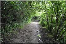TQ5143 : Eden Valley Walk by N Chadwick