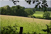 TQ5043 : Meadow near Wat Stock by N Chadwick
