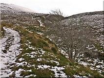 NH3253 : Outlying tree - a survivor by Julian Paren
