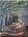 NY8356 : Path in Deneholme Wood (7) : Week 47