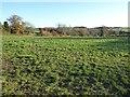 SO5457 : Farmland near Summerhill by Philip Halling