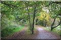 SJ3277 : The Wirral Way near Willaston by Jeff Buck