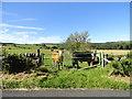 NZ0457 : Cattle in a road side field by Robert Graham