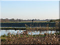 TL5477 : Cycling on Fen Rivers Way by John Sutton