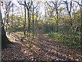 TQ4476 : Path in Oxleas Wood by Marathon