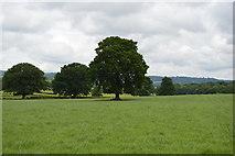 TQ5347 : Single trees by N Chadwick