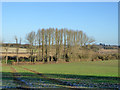 SP6234 : Stand of trees by River Great Ouse by Robin Webster