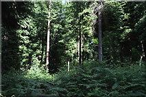 TQ5245 : Redleaf Wood by N Chadwick