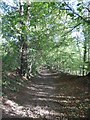 SD6179 : Path to Underley Park, Kirkby Lonsdale by David Smith