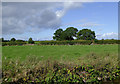 SJ6349 : Pasture north-east of Sound in Cheshire by Roger  Kidd