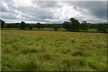 TQ5247 : Meadow, Wickhurst Farm by N Chadwick