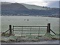 SH7904 : Gate into field by Nigel Brown