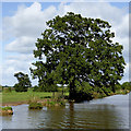 SJ6545 : Shropshire Union Canal north-west of Audlem, Cheshire by Roger  Kidd