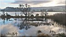 NH5447 : Complex water margin beside River Beauly by Julian Paren