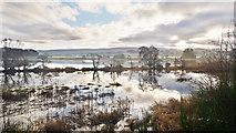NH5447 : Margin of River Beauly by Julian Paren