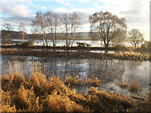 NH5447 : River Beauly from the footpath along its northern bank by Julian Paren