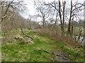 NS5826 : Alder carr, River Ayr Way by Richard Webb