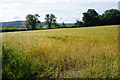 ST7767 : Ripening barley above Batheaston by Bill Boaden