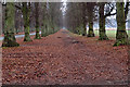 SK6376 : Lime Tree Avenue, Clumber Park by Mick Garratt