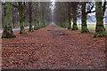 SK6376 : Lime Tree Avenue, Clumber Park by Mick Garratt