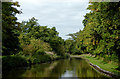 SJ5546 : Llangollen Canal north-west of Marbury in Cheshire by Roger  Kidd