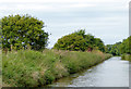 SJ5446 : Llangollen Canal north-west of Marbury in Cheshire by Roger  Kidd