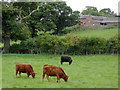 SJ5344 : Canalside grazing near Grindley Brook in Cheshire by Roger  Kidd