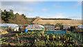 NZ1656 : Allotment gardens near to Lintz : Week 1