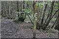 TQ6441 : High Weald Landscape Trail, Snipe Wood by N Chadwick