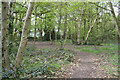 SP3576 : A clearing in Whitley Grove, southeast Coventry by Robin Stott