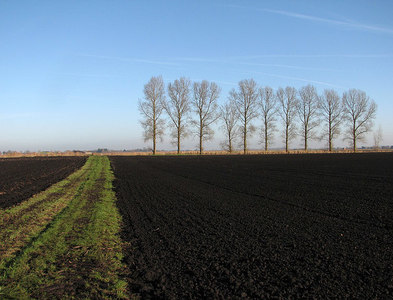 TL5880 : Black earth, a straight track and windbreak trees by John Sutton