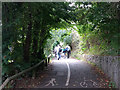 SX8061 : Pedestrians on NCN2 at Totnes by Stephen Craven