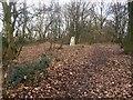 SE3806 : Horse Carr Wood trig point by Steve  Fareham