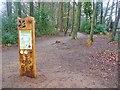 ST7662 : Bath - Fairy Wood by Colin Smith
