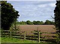 SJ6150 : Farmland near Ravensmoor, Cheshire by Roger  Kidd