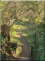 SX1073 : Footpath at Blisland by Derek Harper