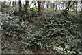 SX5352 : Trackside ferns by N Chadwick